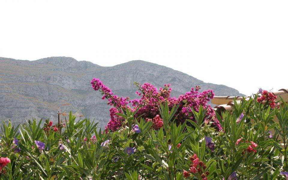 Hintergrundbild Blüten am Montgo