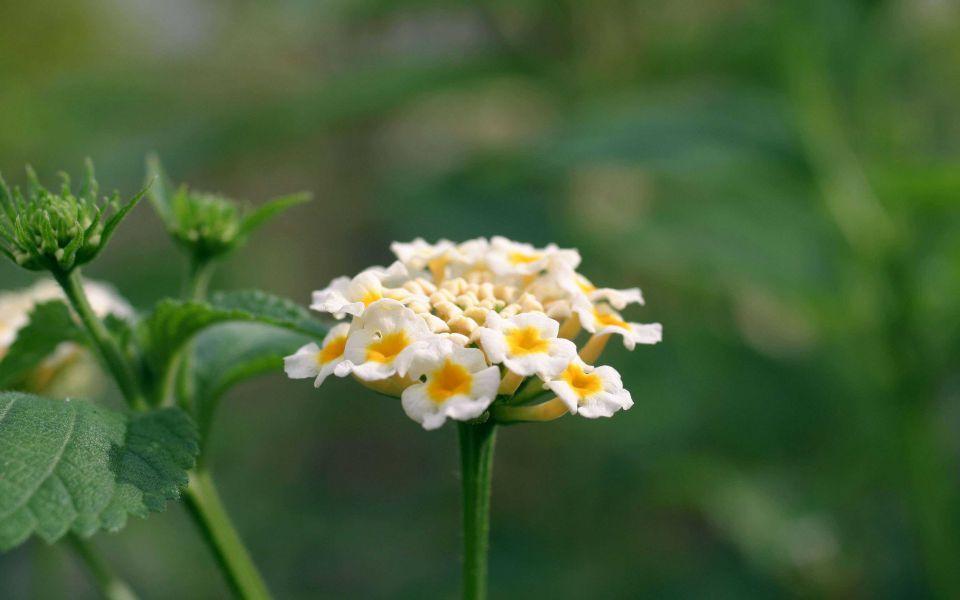 Hintergrundbild Gelbe Blüte von ganz nah