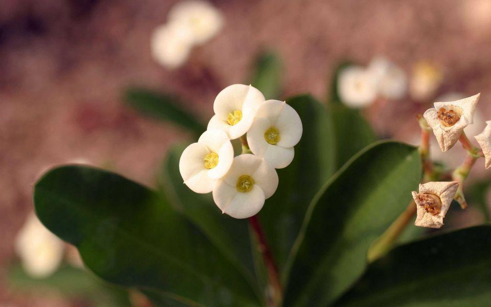 Hintergrundbild Kleine weiße Blume in Nahaufnahme