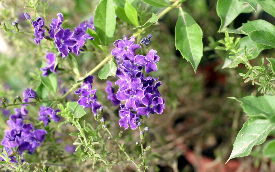 Hintergrundbild Violette Blumen am Wegrand
