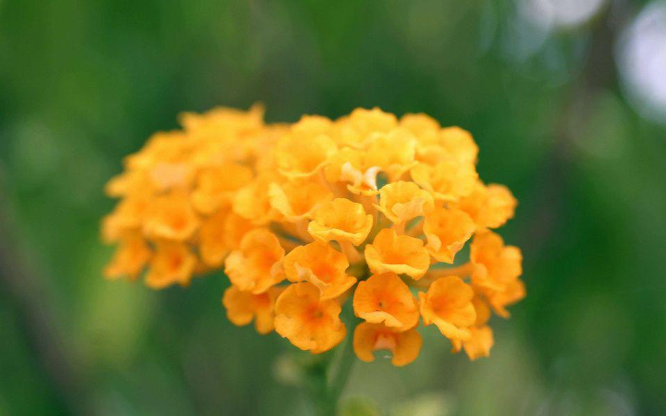 Hintergrundbild Orange Blumen