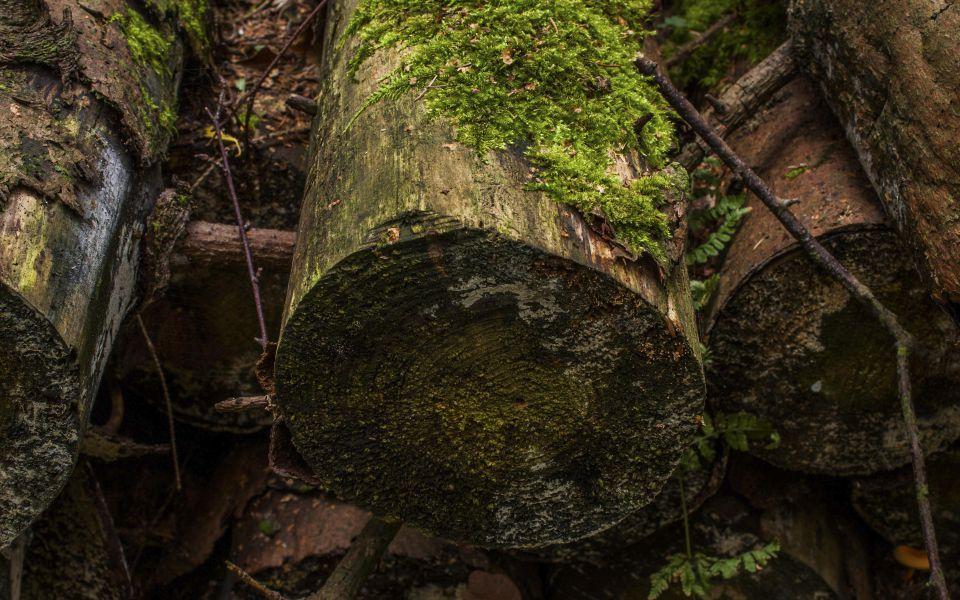 Hintergrundbild Abgeholzt vergessene Baumstämme