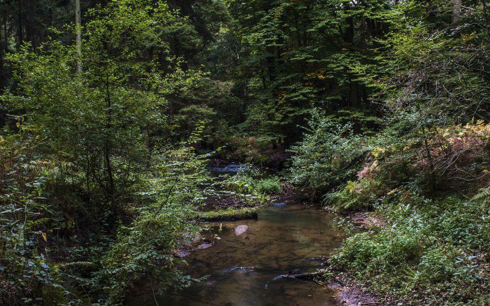 Hintergrundbild Bachlauf im Wald