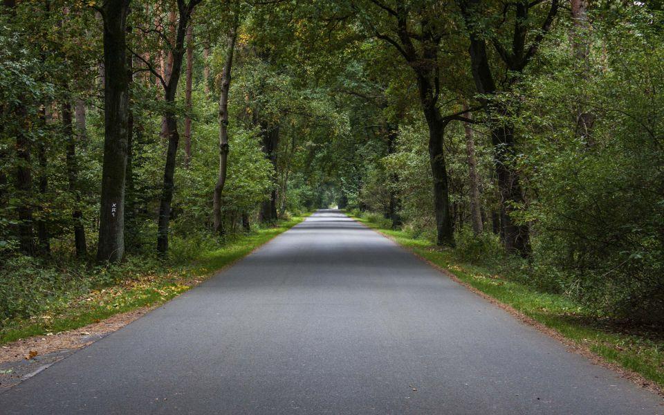 Hintergrundbild Durch den Wald