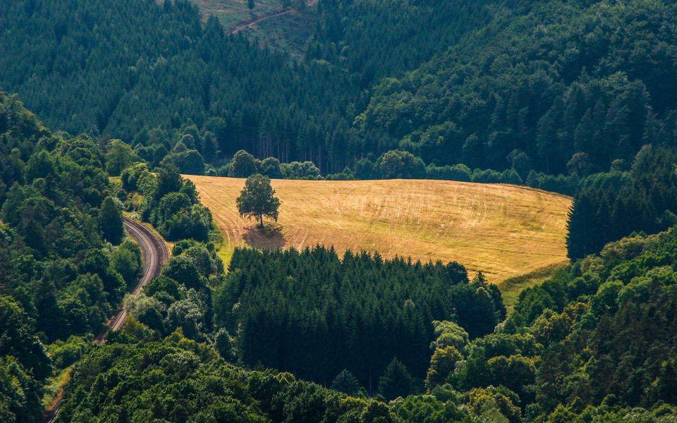 Hintergrundbild Feld mit Baum