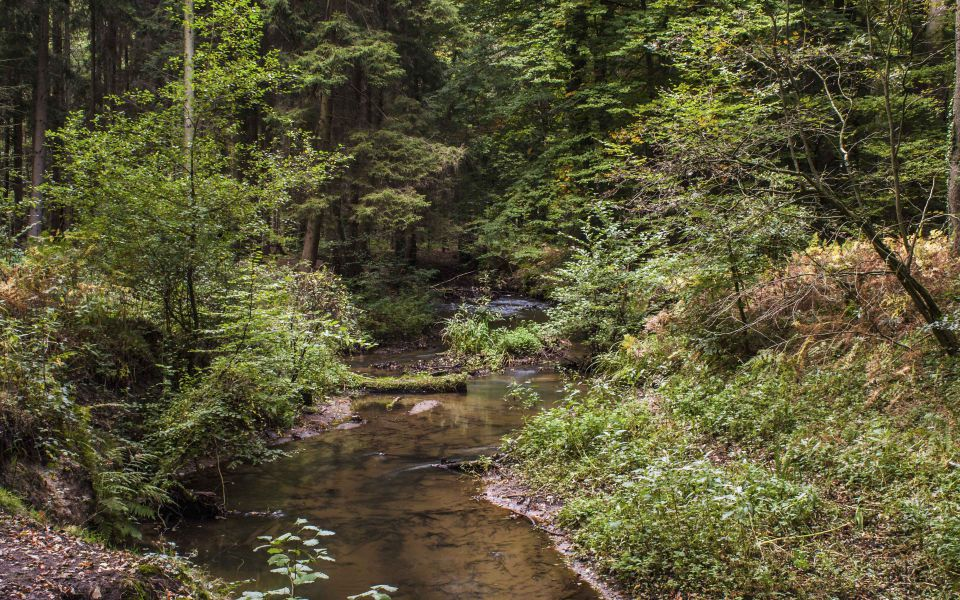 Hintergrundbild Hammbach im Wald