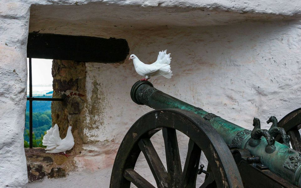 Hintergrundbild Kanone mit Tauben