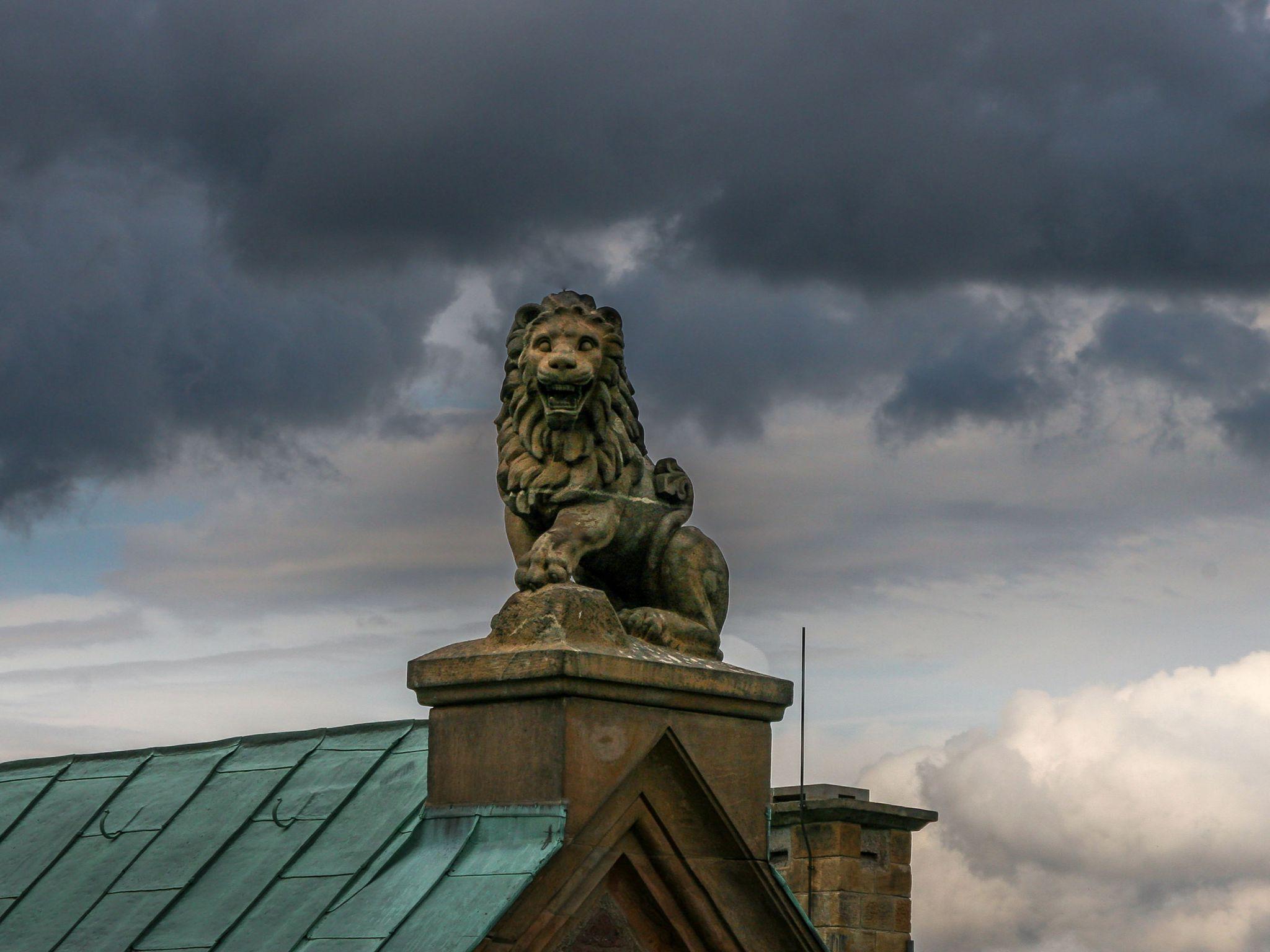 Hintergrundbilder Löwe Auf Dem Palas