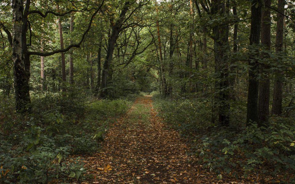 Hintergrundbild Waldweg im Herbst