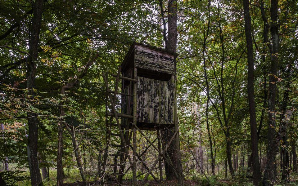 Hintergrundbild Hochsitz im Buchenwald