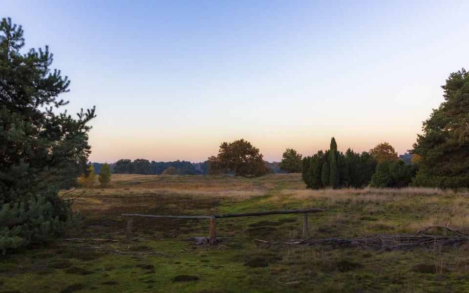 Hintergrundbild Abends in der Westruper Heide