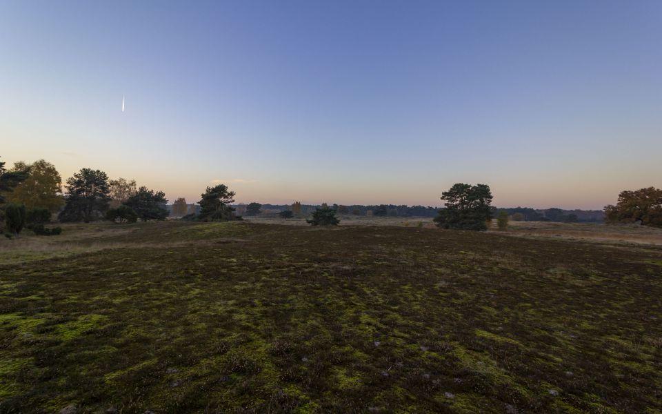 Hintergrundbild Abendstimmung in der Westruper Heide