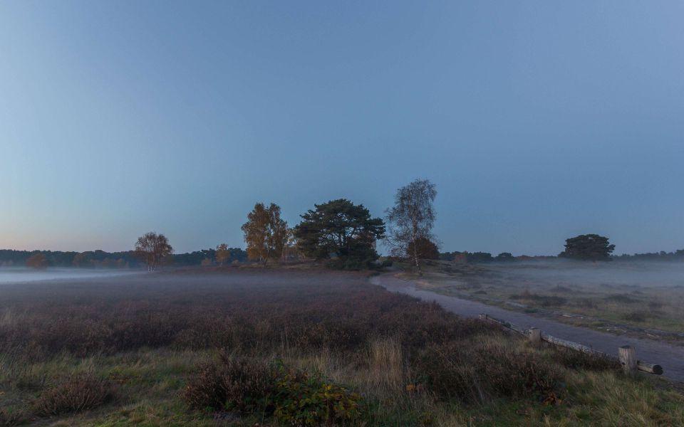Hintergrundbild Dämmerung in der Westruper Heide