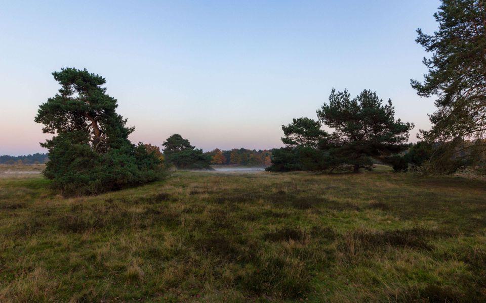 Hintergrundbild Die Heide nach dem Sonnenuntergang