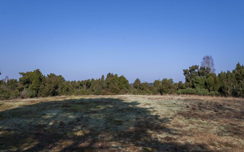 Hintergrundbild Frühlingsmorgen in der Westruper Heide