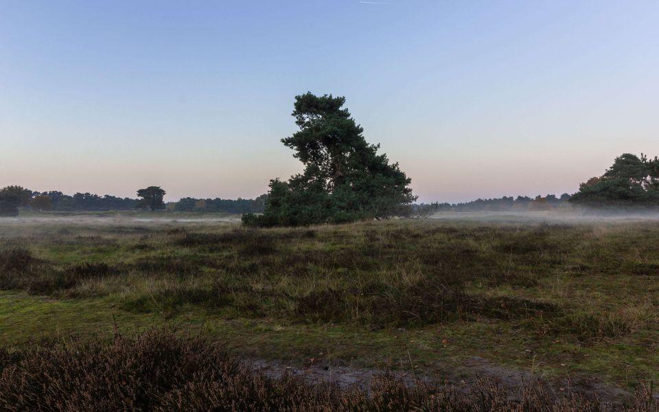 Hintergrundbild Solitärbaum in der Heide