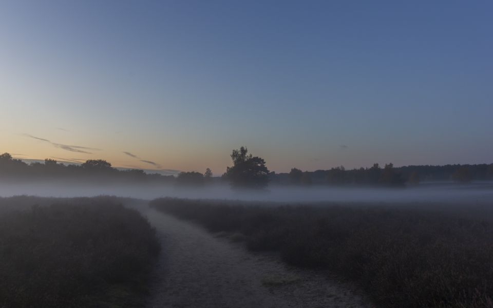 Hintergrundbild Westruper Heide - Weg in den Nebel