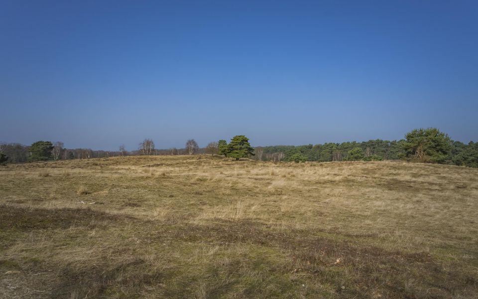 Hintergrundbild Westruper Heide - Frühlingstag