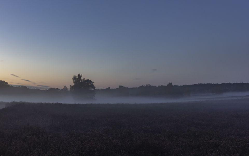 Hintergrundbild Westruper Heide Stillleben