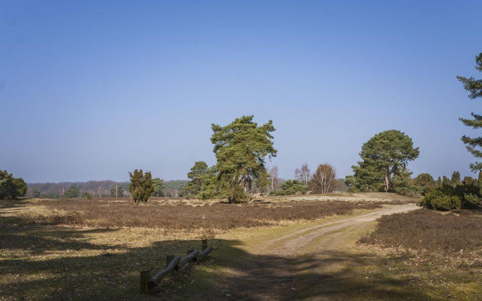 Hintergrundbild Westruper Heide - Weg im Frühling