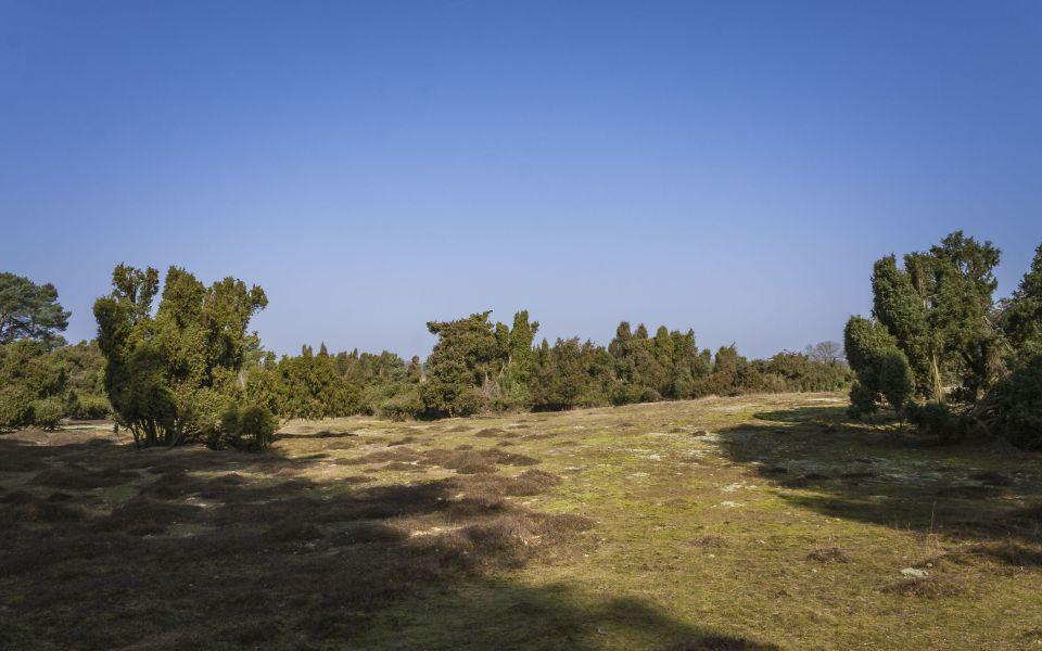 Hintergrundbild Westruper Heide im Frühling