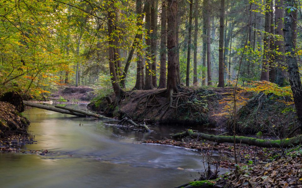 Hintergrundbild Bach im Herbstwald