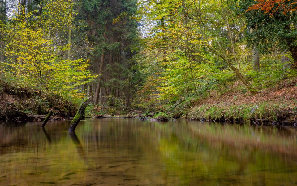 Hintergrundbild Bach im Wald
