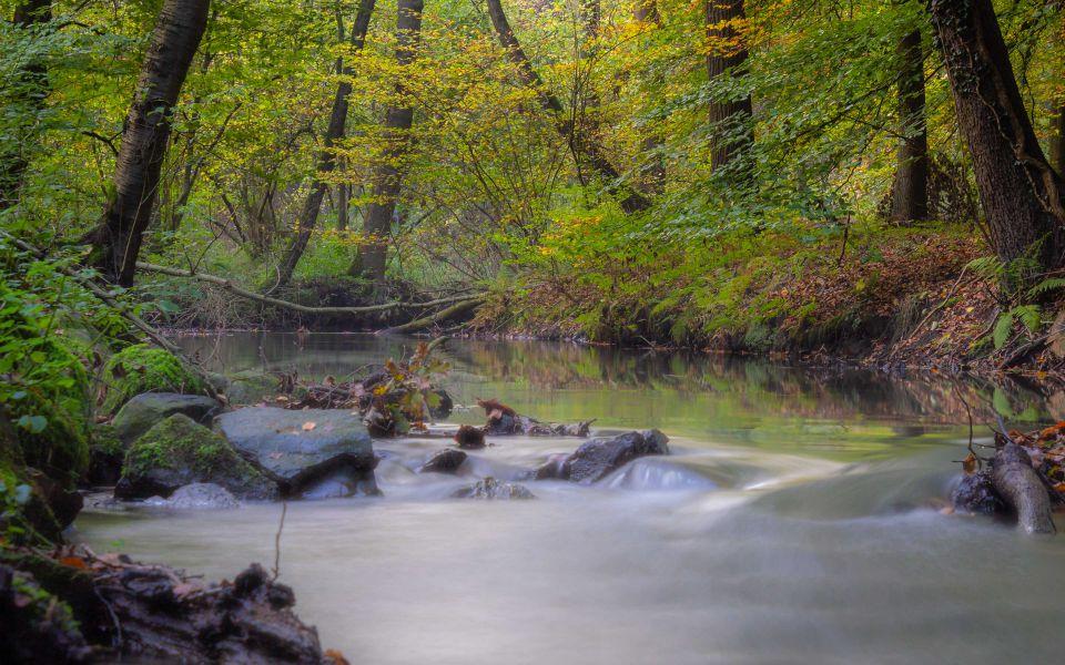 Hintergrundbild Bach im herbstlichen Wald