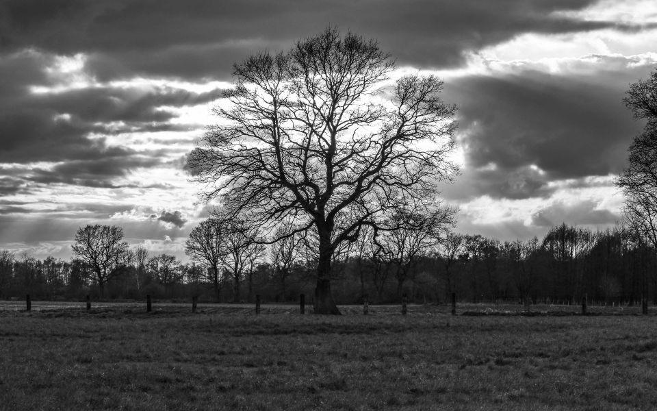 Hintergrundbild Baum Silhouette in schwarzweiß
