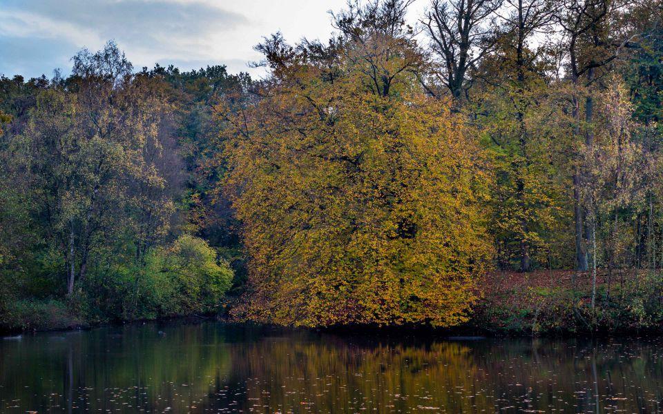 Hintergrundbild Baum am See