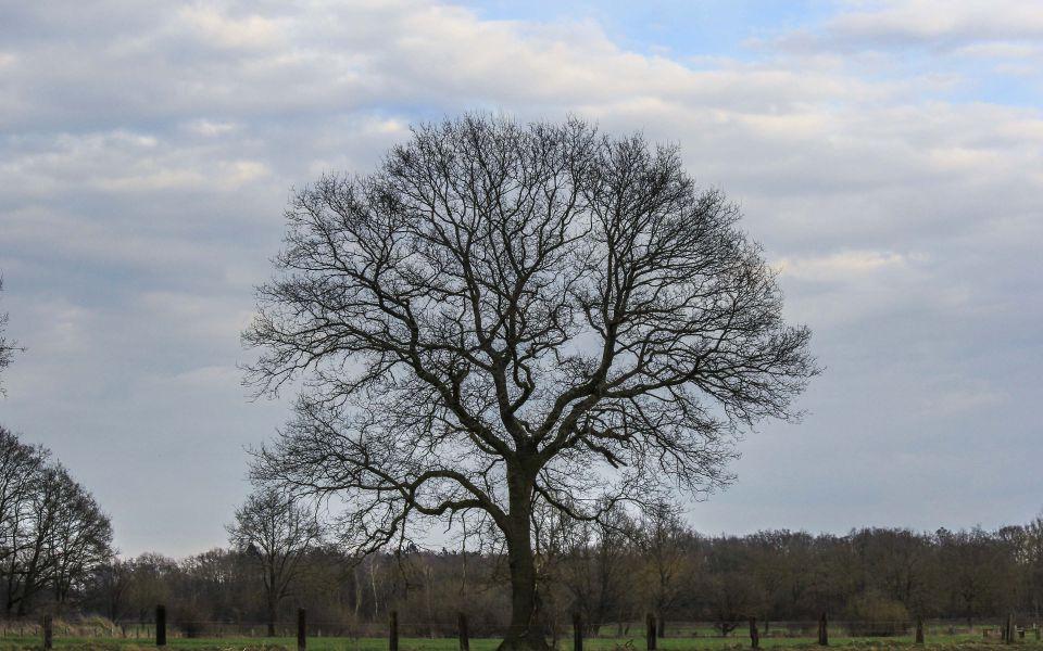 Hintergrundbild Baum im Frühjahr