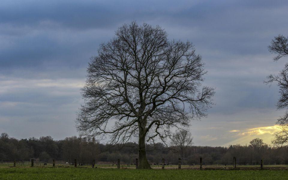 Hintergrundbild Baum im Frühling
