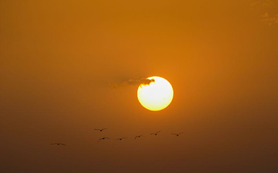 Hintergrundbild Sonnenuntergang mit Möwen
