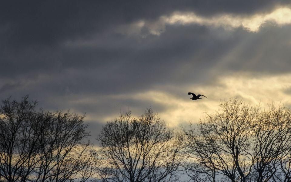 Hintergrundbild Vogel Silhouette