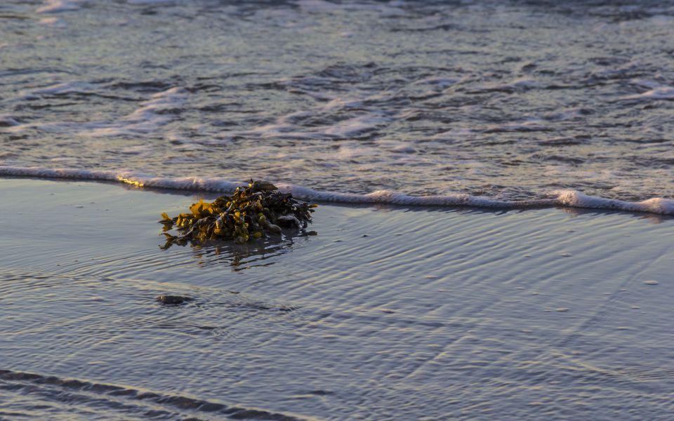 Hintergrundbild Treibgut Ostseestrand