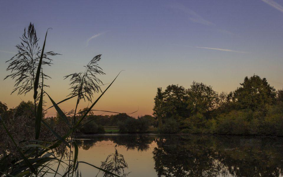 Hintergrundbild - Abendstimmung am Mühlteich