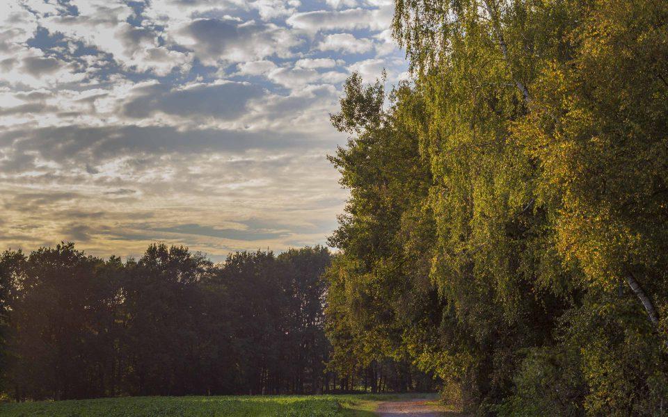 Hintergrundbild - Am Feldrand im Herbst