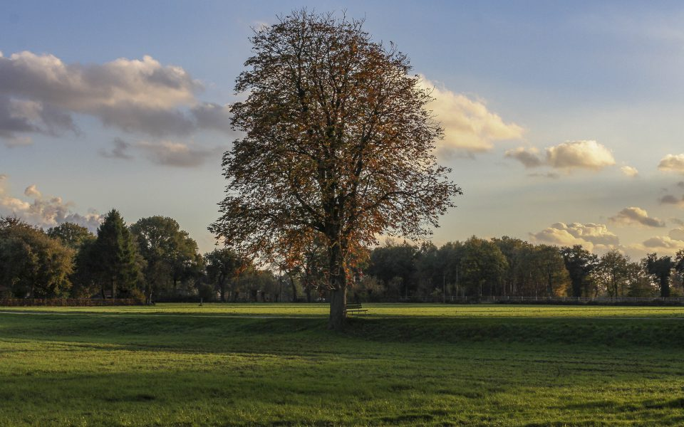 Hintergrundbild - Baum am Feldrand