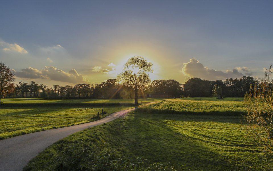 Hintergrundbild - Baum mit Sonnenuntergang