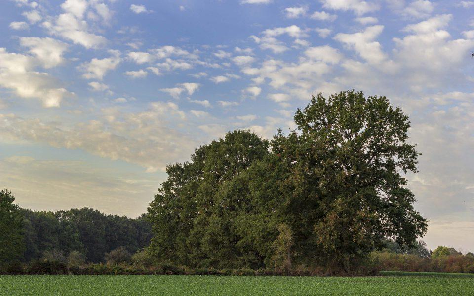 Hintergrundbild - Baumgruppe im Herbst