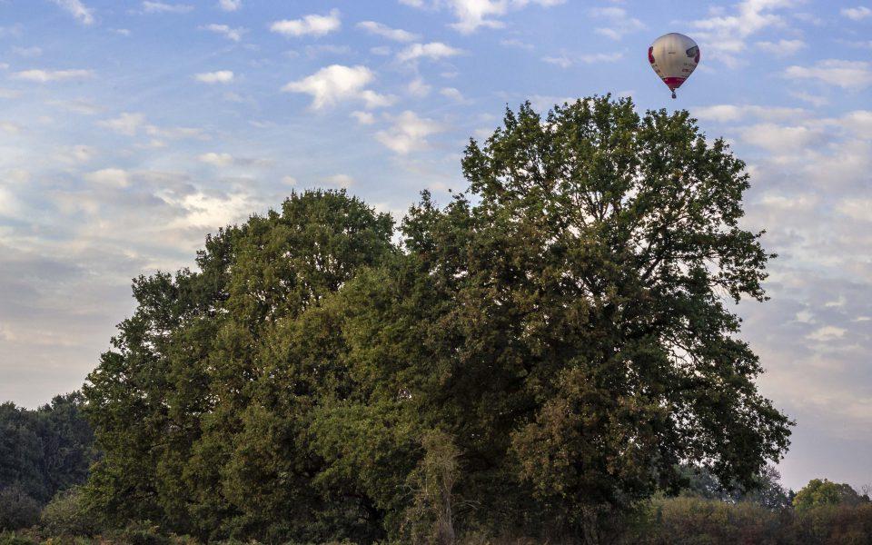 Hintergrundbild - Baumgruppe mit Heißluftballon