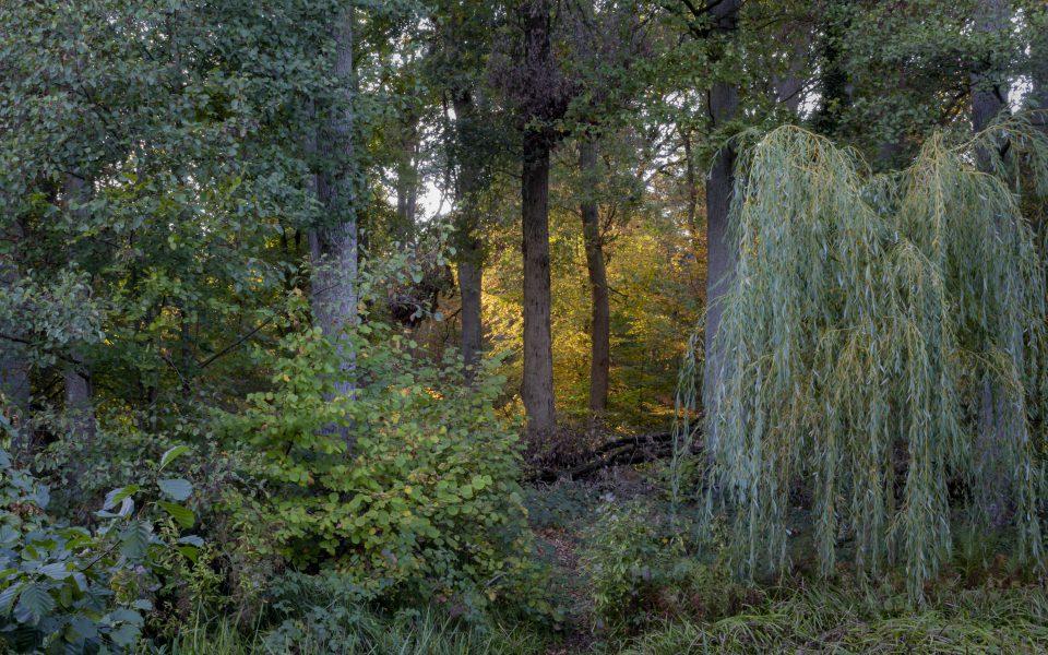 Hintergrundbild - Blick in den Wald