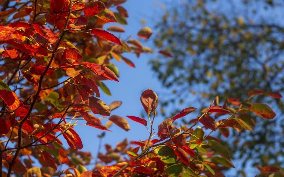 Hintergrundbild - Bunte Farben im Herbst