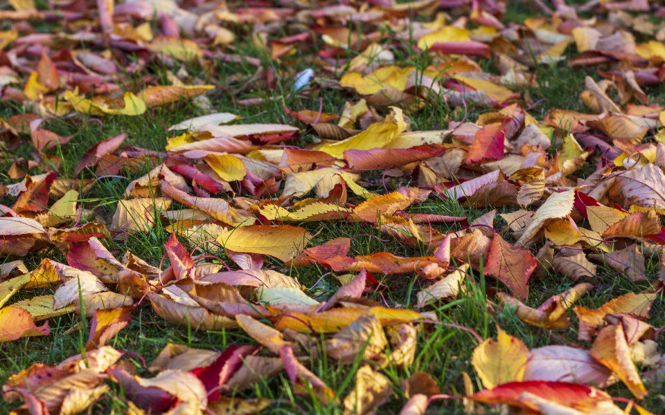 Hintergrundbild - Buntes Herbstlaub