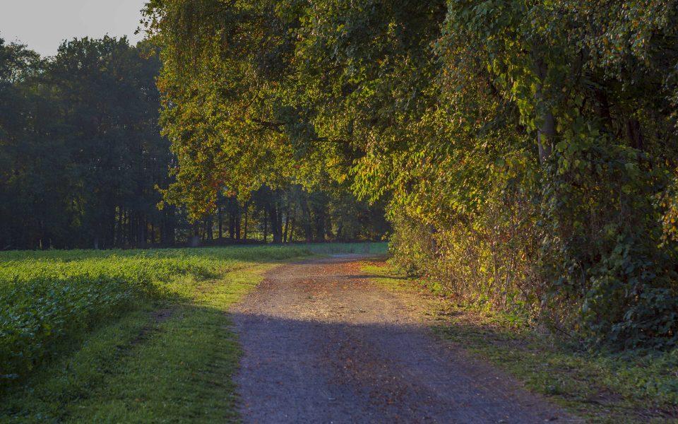 Hintergrundbild - Feldweg im Herbst