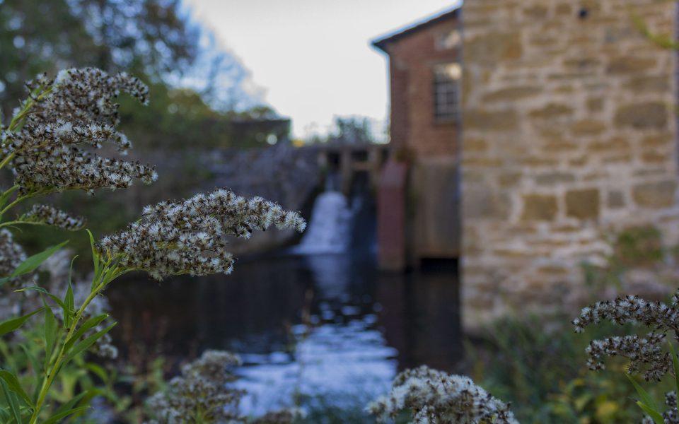 Hintergrundbild - Goldruten vor der Mühle
