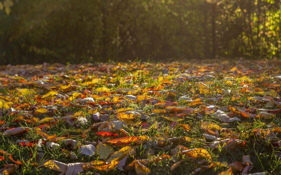 Hintergrundbild - Herbstlaub im Gegenlicht