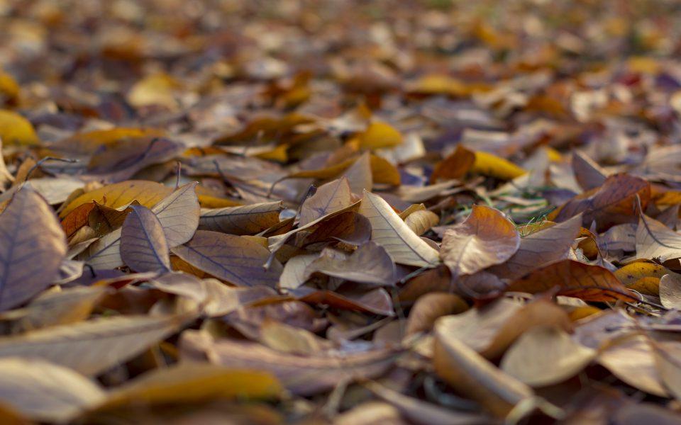 Hintergrundbild - Herbstlaub in Nahaufnahme