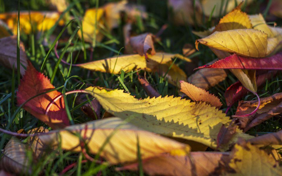 Hintergrundbild - Herbstlaub in der Abendsonne