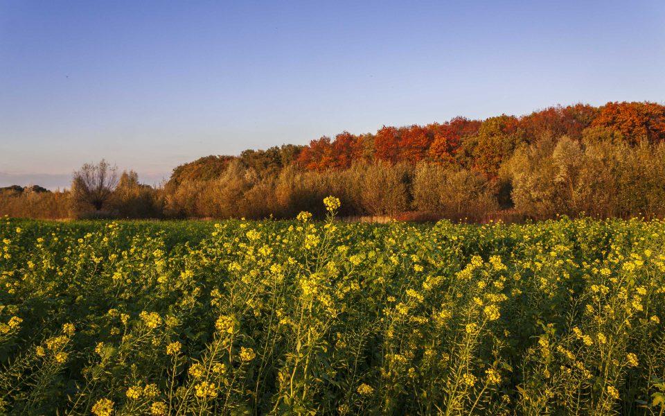 Hintergrundbild - Herbstliches Farbenspiel